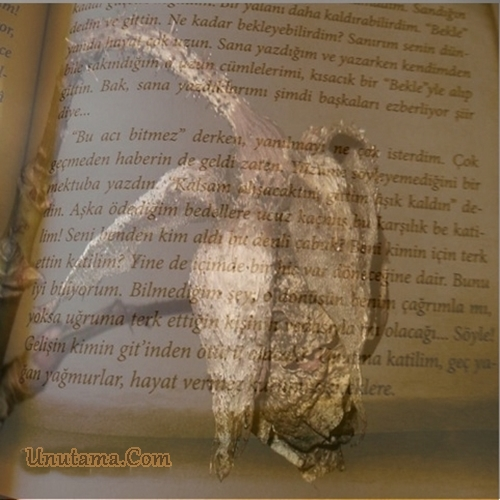 http://resim.unutama.com/katilim-kahraman-tazeoglu-1.jpg